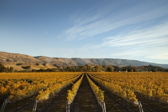 vinyard_seasonal_autumn
